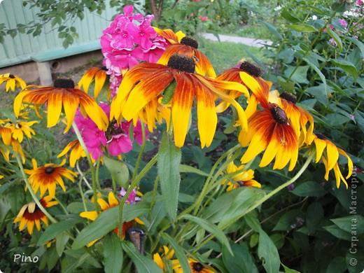 Сначала, я хотела поделится с вами фотографиями лилий, которые растут у нас на даче (мама их очень любит), но пока искала фото, не смогла удержать и в итоге получилась цветочная подборка ^_^ фото 29