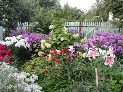 Здравствуй страна! Идет время и в саду происходят перемены. Вот хочу поделиться новостями :) В первую очередь предлагаю посмотреть на лилии. Они недавно распустились. Вот эта сама крупная и думаю сама красивая :) А аромат какой они все источают - прелесть. фото 9
