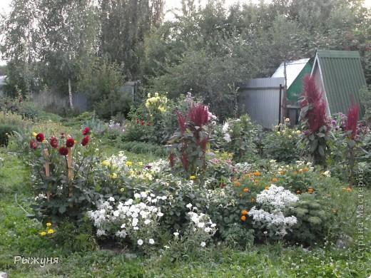 Здравствуй страна! Идет время и в саду происходят перемены. Вот хочу поделиться новостями :) В первую очередь предлагаю посмотреть на лилии. Они недавно распустились. Вот эта сама крупная и думаю сама красивая :) А аромат какой они все источают - прелесть. фото 10