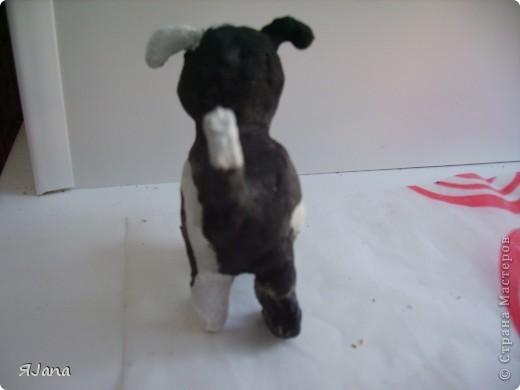 Знакомьтесь! Это мой щенок по кличке Дружок. фото 5