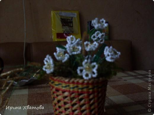 цветы, дерево фото 4