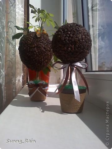 кофейные деревца фото 1