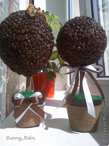 кофейные деревца фото 2