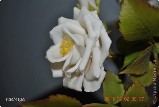 Здравствуйте, дорогие мастерицы, вот после долгого молчания выставляю на ваш суд мои новые цветы. Правда, определиться с их названием не могу, что-то среднее между садовой розой и шиповником...  фото 9