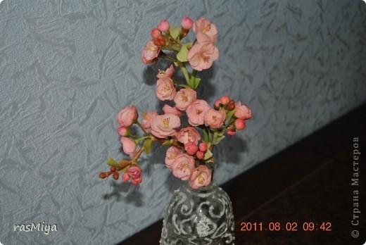 Сакура (не без нее ))))))))))))  фото 4