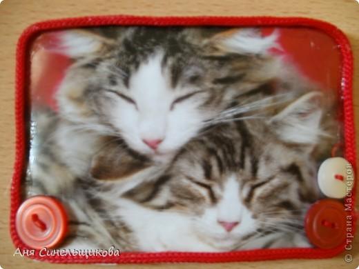Эту серию мы посвятили нашим домашним животным: Масяне и Тиме, ведь они тоже когда-то были маленькими пушистыми котятами. фото 4