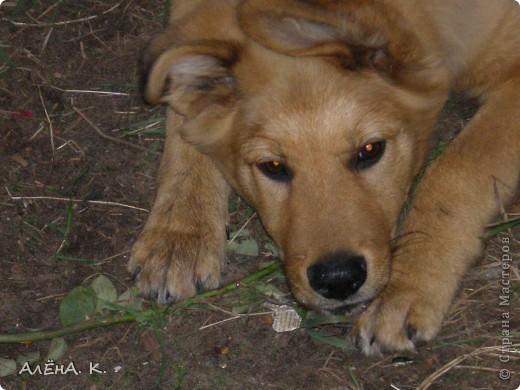 Очень люблю фотографировать животных. Своих и не только... Это золотое детство моей собаки Джима) фото 1