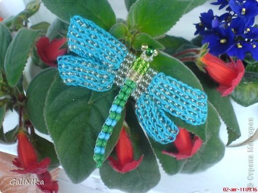 Эта стрекоза заворожила меня своими голубыми крыльями. Впервые вижу такую красавицу! Здесь я покажу место её обитания и представлю свои работы, сделанные под впечатлением виденного. фото 10