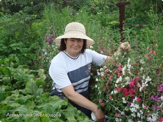 Цветут красавицы розы. фото 36