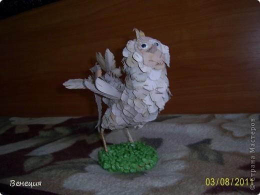 Птичка фото 2