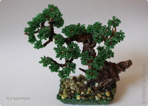 Решила я устроить фотосессию для своих деревьев. Это мои любимчики.  фото 35