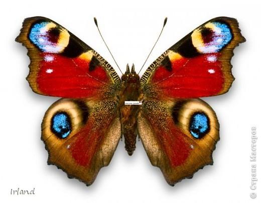 Моя первая красивая бабочка, сама она 10х10, рамка 20х20. фото 5