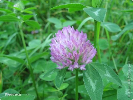 """В розах (http://stranamasterov.ru/node/223279), и не только, я """"охотилась"""" на бабочек и прочих насекомых. Дул ветер, и было очень трудно """"поймать"""" их - цветы качались и бабочки быстро перелетали на другое место. Но мне удалось! Полюбуйтесь!  Махаон на бутоне розы. фото 3"""