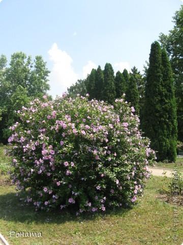 """В розах (https://stranamasterov.ru/node/223279), и не только, я """"охотилась"""" на бабочек и прочих насекомых. Дул ветер, и было очень трудно """"поймать"""" их - цветы качались и бабочки быстро перелетали на другое место. Но мне удалось! Полюбуйтесь!  Махаон на бутоне розы. фото 6"""