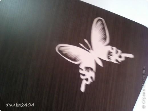 Бабочки в зале фото 6
