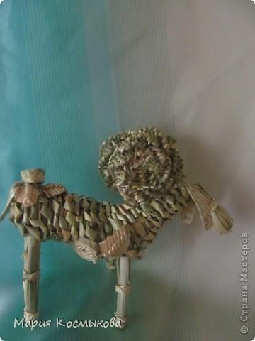 Пастушок фото 4