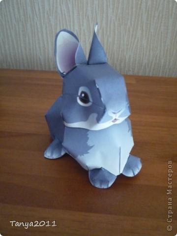 Серый крольчонок фото 2