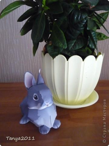 Серый крольчонок фото 1