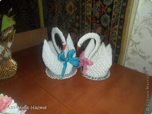 Мои Лебеди фото 1