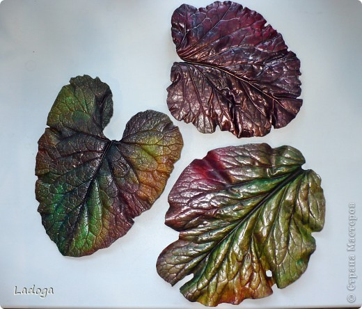 позировали: лопух, бадан и капустный лист фото 1