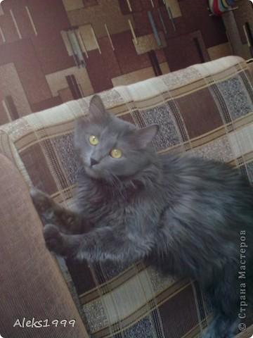 Всем привет! Сегодня я решила сделать фоторепортаж о моем любимом коте Персике. О себе он сейчас все сам расскажет... фото 33
