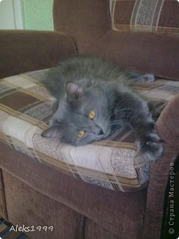 Всем привет! Сегодня я решила сделать фоторепортаж о моем любимом коте Персике. О себе он сейчас все сам расскажет... фото 28