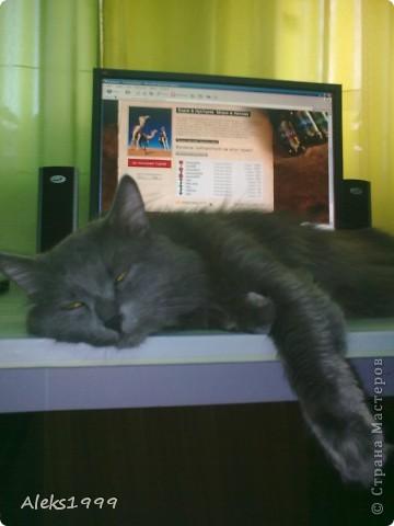 Всем привет! Сегодня я решила сделать фоторепортаж о моем любимом коте Персике. О себе он сейчас все сам расскажет... фото 7