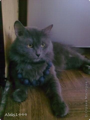 Всем привет! Сегодня я решила сделать фоторепортаж о моем любимом коте Персике. О себе он сейчас все сам расскажет... фото 4
