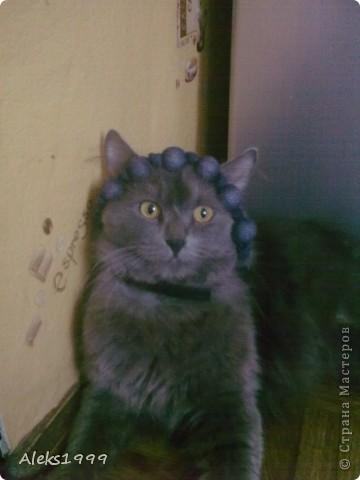 Всем привет! Сегодня я решила сделать фоторепортаж о моем любимом коте Персике. О себе он сейчас все сам расскажет... фото 5