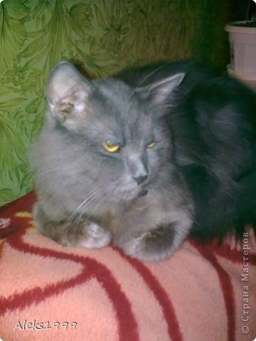 Всем привет! Сегодня я решила сделать фоторепортаж о моем любимом коте Персике. О себе он сейчас все сам расскажет... фото 29