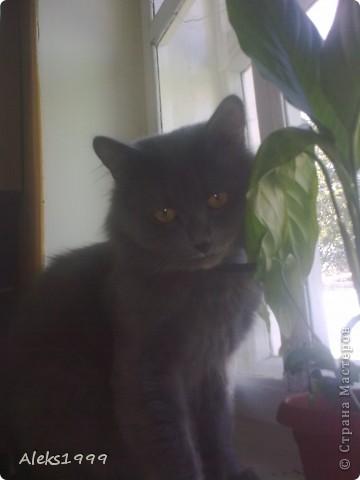 Всем привет! Сегодня я решила сделать фоторепортаж о моем любимом коте Персике. О себе он сейчас все сам расскажет... фото 14