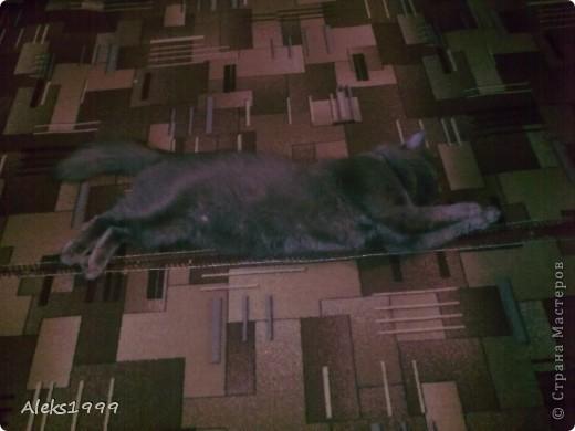 Всем привет! Сегодня я решила сделать фоторепортаж о моем любимом коте Персике. О себе он сейчас все сам расскажет... фото 8