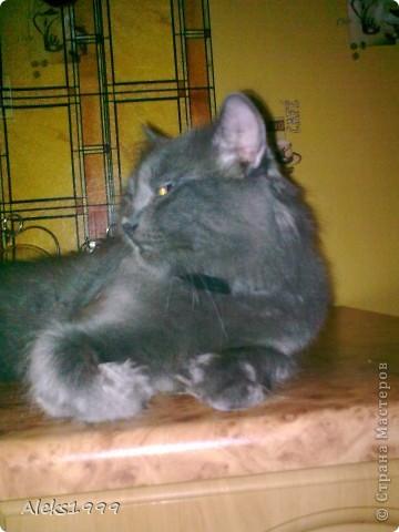 Всем привет! Сегодня я решила сделать фоторепортаж о моем любимом коте Персике. О себе он сейчас все сам расскажет... фото 30