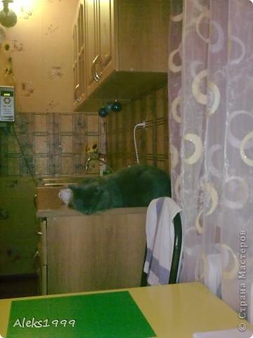 Всем привет! Сегодня я решила сделать фоторепортаж о моем любимом коте Персике. О себе он сейчас все сам расскажет... фото 9