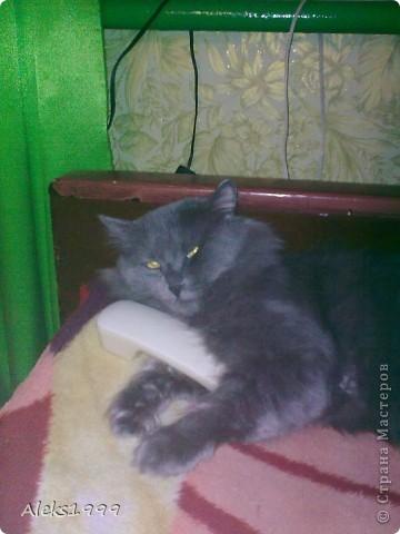 Всем привет! Сегодня я решила сделать фоторепортаж о моем любимом коте Персике. О себе он сейчас все сам расскажет... фото 15
