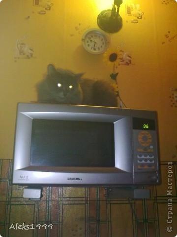 Всем привет! Сегодня я решила сделать фоторепортаж о моем любимом коте Персике. О себе он сейчас все сам расскажет... фото 10
