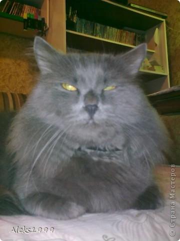 Всем привет! Сегодня я решила сделать фоторепортаж о моем любимом коте Персике. О себе он сейчас все сам расскажет... фото 3