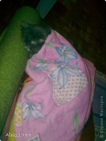 Всем привет! Сегодня я решила сделать фоторепортаж о моем любимом коте Персике. О себе он сейчас все сам расскажет... фото 18