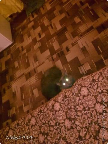 Всем привет! Сегодня я решила сделать фоторепортаж о моем любимом коте Персике. О себе он сейчас все сам расскажет... фото 17