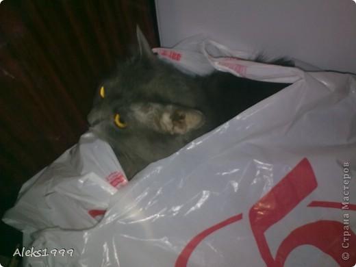 Всем привет! Сегодня я решила сделать фоторепортаж о моем любимом коте Персике. О себе он сейчас все сам расскажет... фото 21