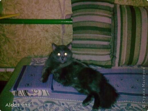 Всем привет! Сегодня я решила сделать фоторепортаж о моем любимом коте Персике. О себе он сейчас все сам расскажет... фото 2