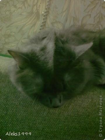 Всем привет! Сегодня я решила сделать фоторепортаж о моем любимом коте Персике. О себе он сейчас все сам расскажет... фото 20