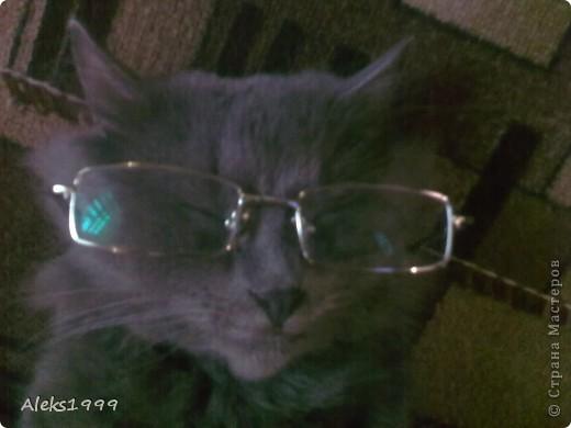 Всем привет! Сегодня я решила сделать фоторепортаж о моем любимом коте Персике. О себе он сейчас все сам расскажет... фото 23