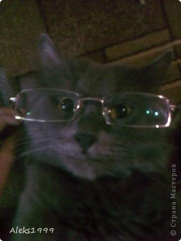 Всем привет! Сегодня я решила сделать фоторепортаж о моем любимом коте Персике. О себе он сейчас все сам расскажет... фото 22
