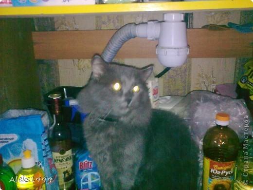 Всем привет! Сегодня я решила сделать фоторепортаж о моем любимом коте Персике. О себе он сейчас все сам расскажет... фото 24