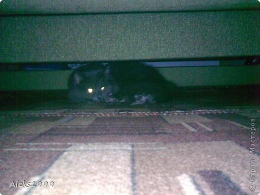 Всем привет! Сегодня я решила сделать фоторепортаж о моем любимом коте Персике. О себе он сейчас все сам расскажет... фото 25