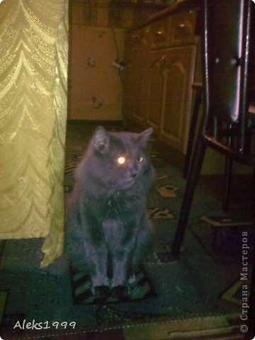 Всем привет! Сегодня я решила сделать фоторепортаж о моем любимом коте Персике. О себе он сейчас все сам расскажет... фото 26