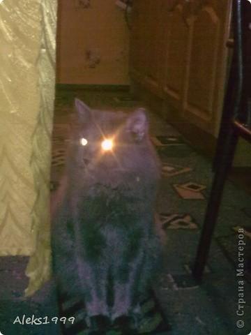 Всем привет! Сегодня я решила сделать фоторепортаж о моем любимом коте Персике. О себе он сейчас все сам расскажет... фото 27