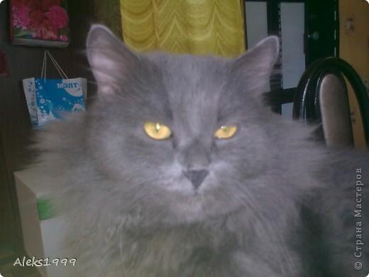 Всем привет! Сегодня я решила сделать фоторепортаж о моем любимом коте Персике. О себе он сейчас все сам расскажет... фото 1