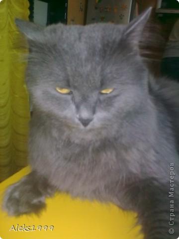 Всем привет! Сегодня я решила сделать фоторепортаж о моем любимом коте Персике. О себе он сейчас все сам расскажет... фото 32